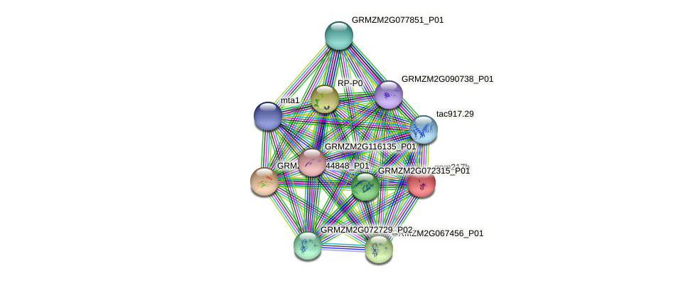 gpm217b protein (Zea mays) - STRING interaction network
