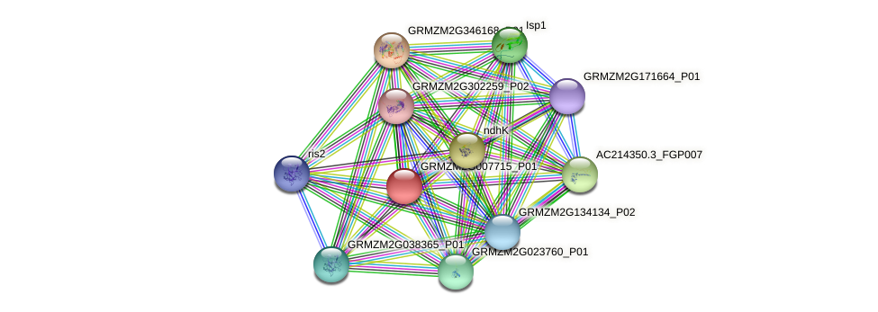 GRMZM2G007715_P01 protein (Zea mays) - STRING interaction network