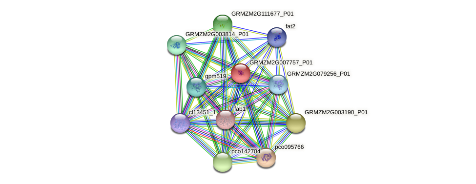 GRMZM2G007757_P01 protein (Zea mays) - STRING interaction network