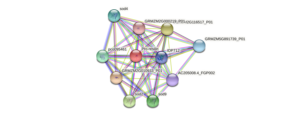 GRMZM2G008202_P03 protein (Zea mays) - STRING interaction network