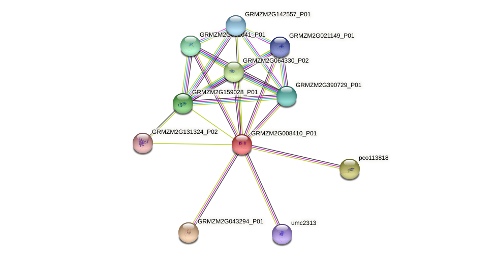 GRMZM2G008410_P01 protein (Zea mays) - STRING interaction network