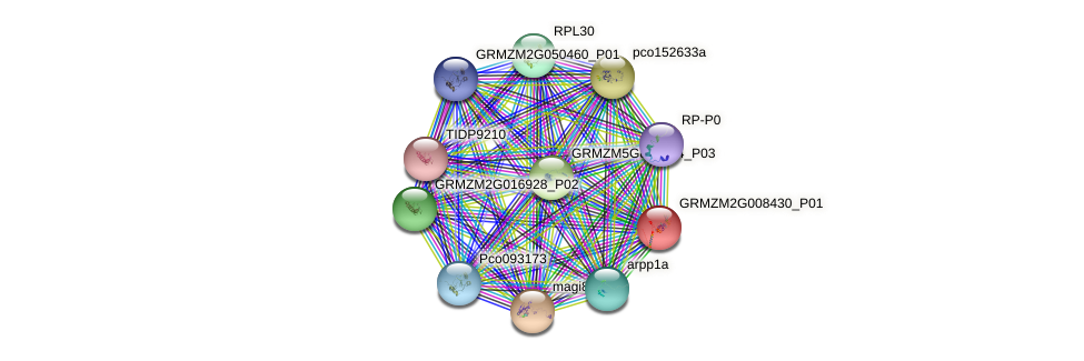 GRMZM2G008430_P01 protein (Zea mays) - STRING interaction network