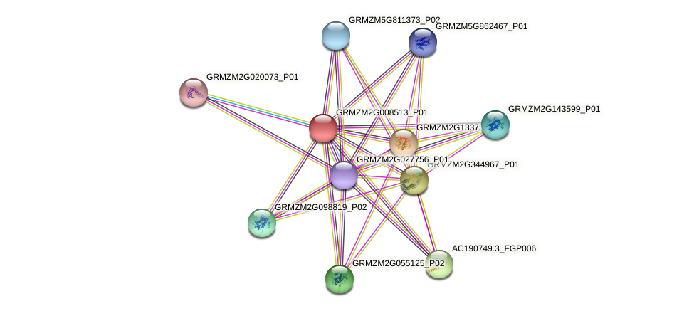 GRMZM2G008513_P01 protein (Zea mays) - STRING interaction network