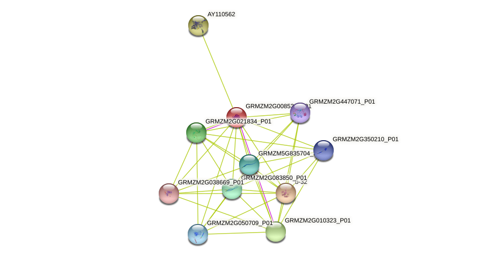 GRMZM2G008539_P01 protein (Zea mays) - STRING interaction network