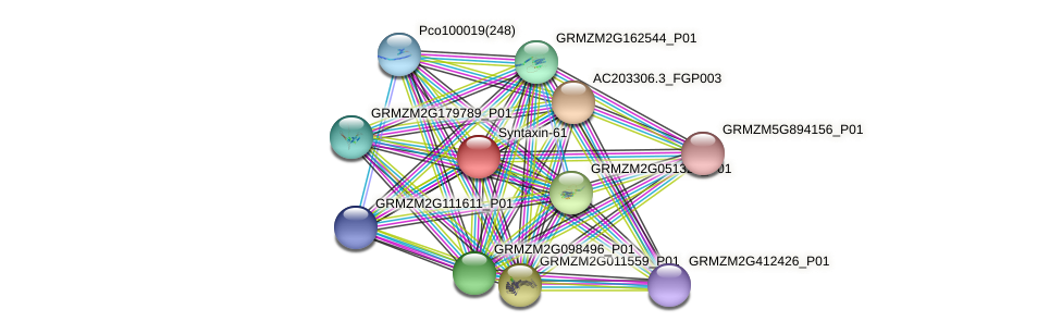 GRMZM2G008638_P01 protein (Zea mays) - STRING interaction network
