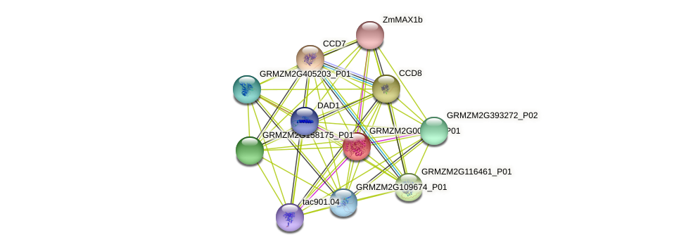 GRMZM2G008751_P01 protein (Zea mays) - STRING interaction network