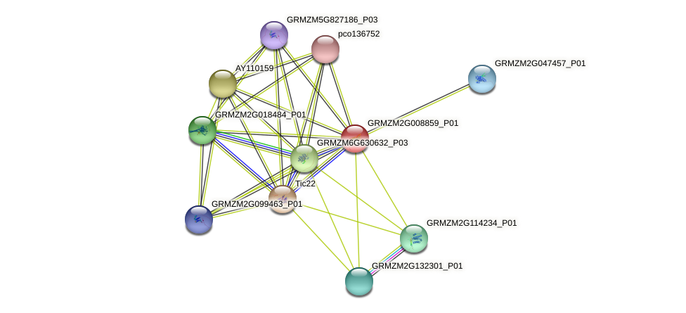GRMZM2G008859_P01 protein (Zea mays) - STRING interaction network