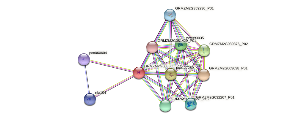 GRMZM2G008865_P01 protein (Zea mays) - STRING interaction network