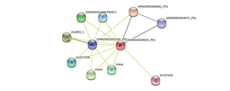 Cel21 protein (Zea mays) - STRING interaction network
