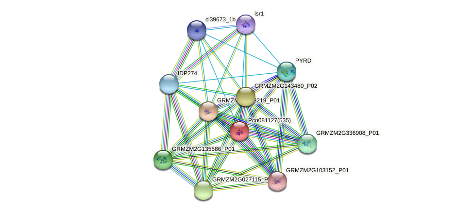 GRMZM2G009196_P01 protein (Zea mays) - STRING interaction network