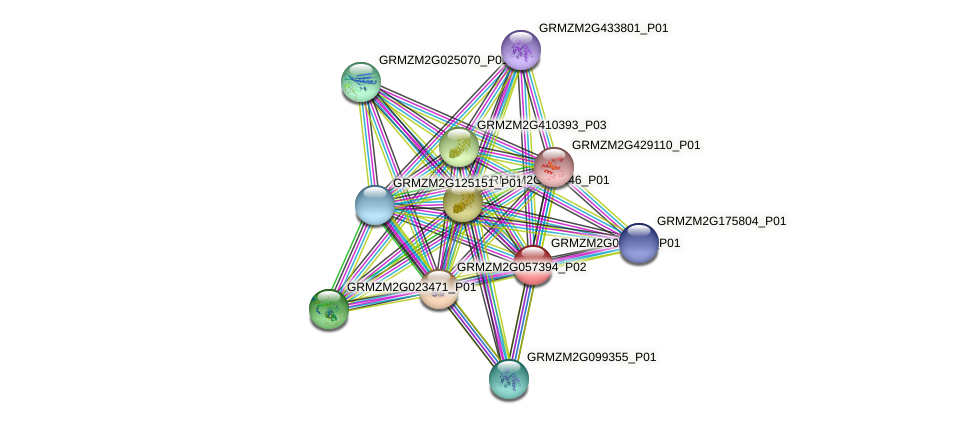 GRMZM2G009346_P01 protein (Zea mays) - STRING interaction network