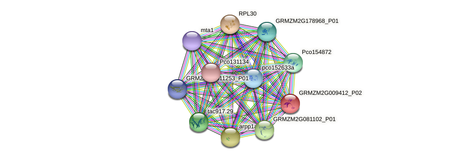 GRMZM2G009412_P02 protein (Zea mays) - STRING interaction network