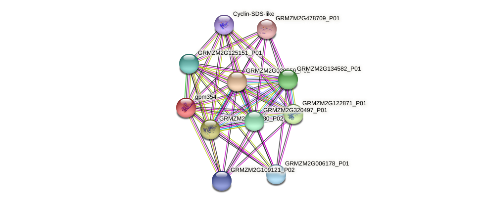 gpm354 protein (Zea mays) - STRING interaction network