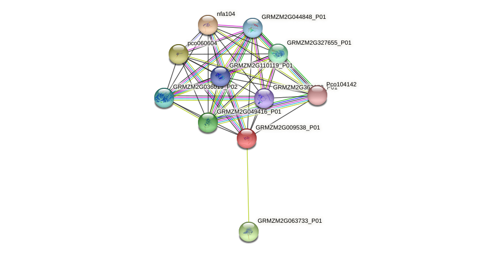 GRMZM2G009538_P01 protein (Zea mays) - STRING interaction network