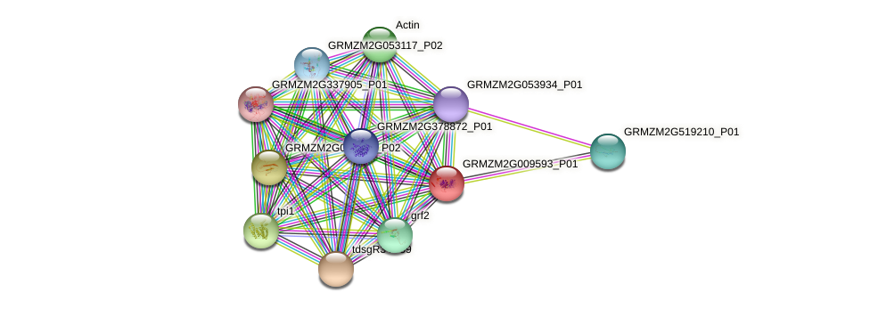 GRMZM2G009593_P01 protein (Zea mays) - STRING interaction network
