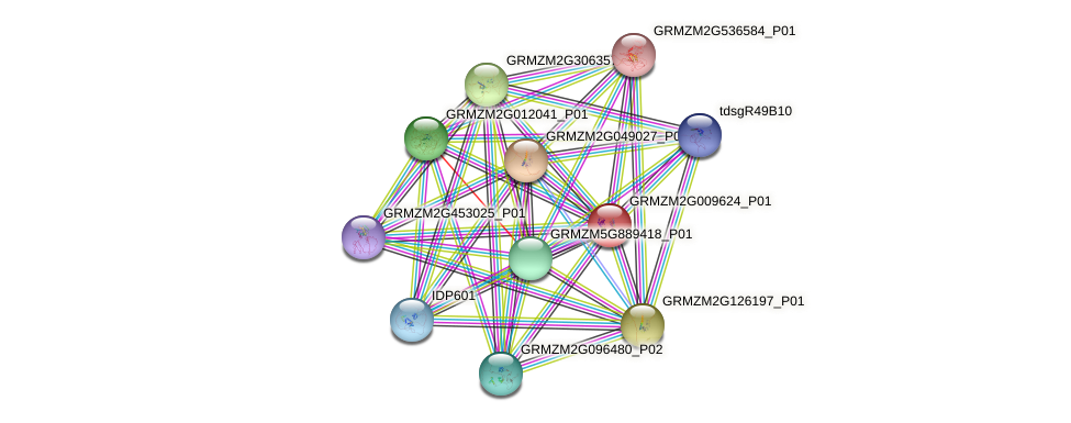 GRMZM2G009624_P01 protein (Zea mays) - STRING interaction network
