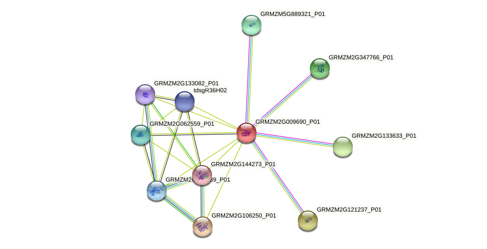GRMZM2G009690_P01 protein (Zea mays) - STRING interaction network