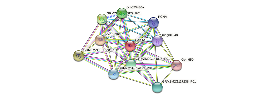 GRMZM2G009703_P01 protein (Zea mays) - STRING interaction network