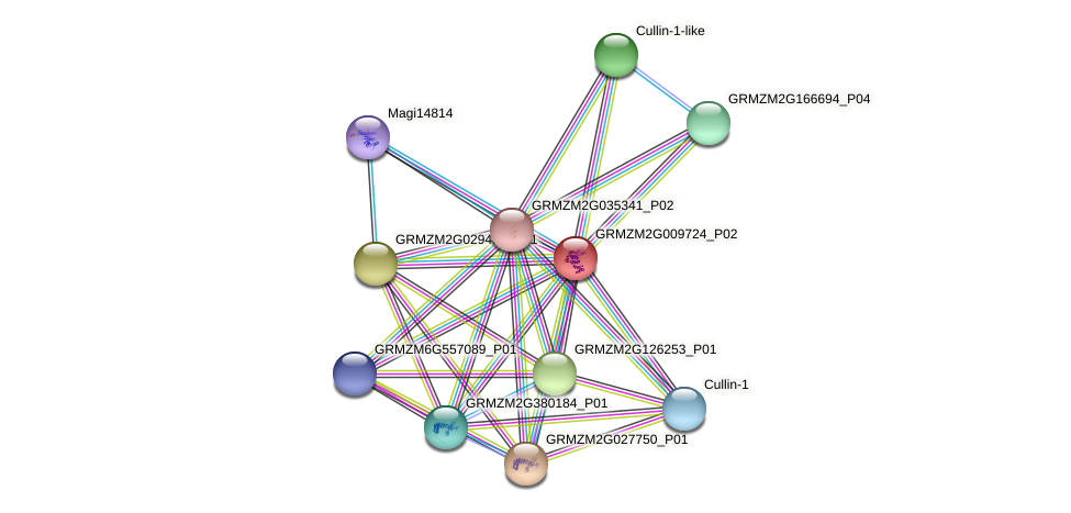GRMZM2G009724_P01 protein (Zea mays) - STRING interaction network