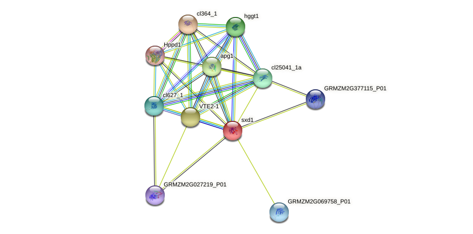 SDX1 protein (Zea mays) - STRING interaction network
