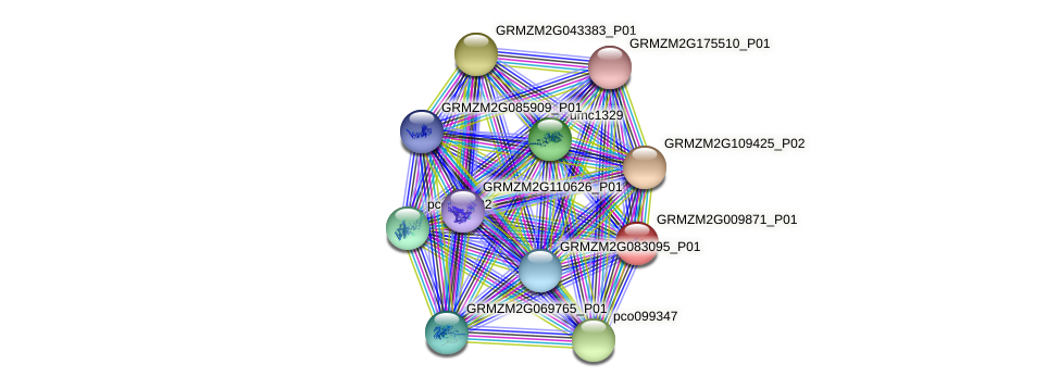 GRMZM2G009871_P01 protein (Zea mays) - STRING interaction network