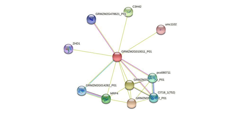 GRMZM2G010011_P01 protein (Zea mays) - STRING interaction network