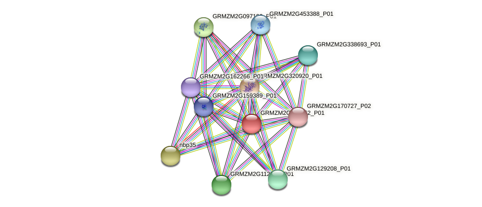 Zm.49253 protein (Zea mays) - STRING interaction network