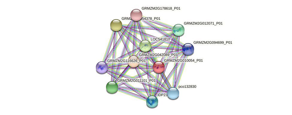 GRMZM2G010054_P01 protein (Zea mays) - STRING interaction network