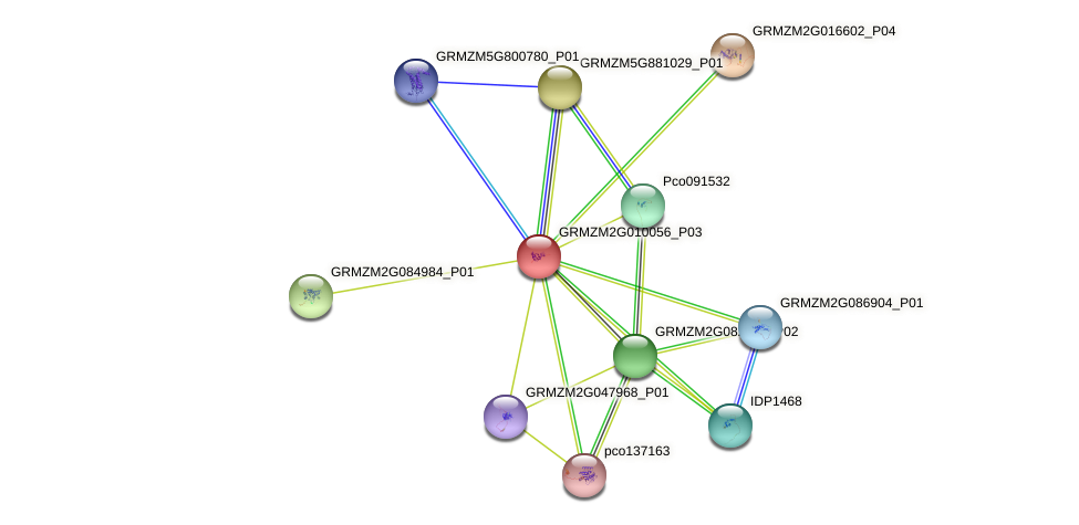 GRMZM2G010056_P03 protein (Zea mays) - STRING interaction network