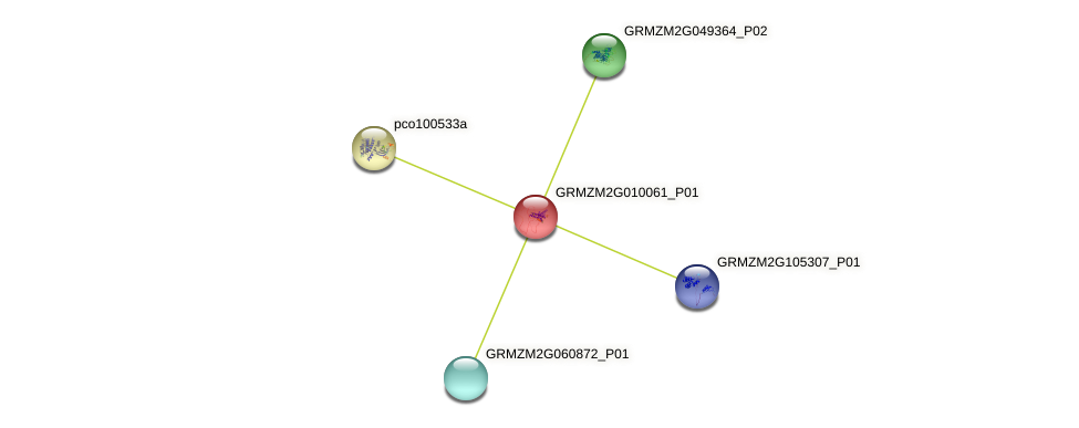 GRMZM2G010061_P01 protein (Zea mays) - STRING interaction network