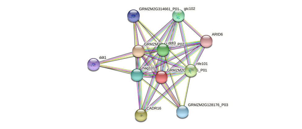 GRMZM2G010085_P01 protein (Zea mays) - STRING interaction network