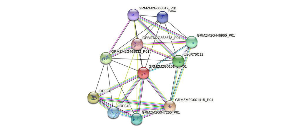 GRMZM2G010149_P01 protein (Zea mays) - STRING interaction network