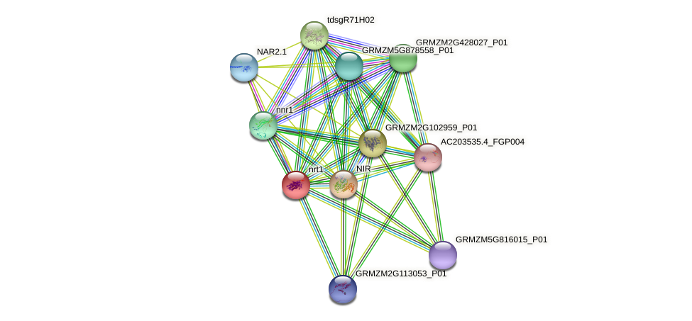 nrt1 protein (Zea mays) - STRING interaction network