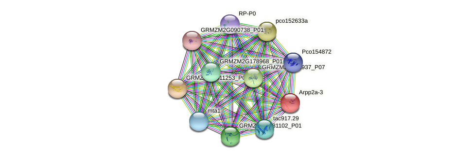 rpp2a-3 protein (Zea mays) - STRING interaction network