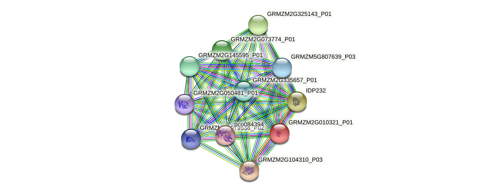 GRMZM2G010321_P01 protein (Zea mays) - STRING interaction network