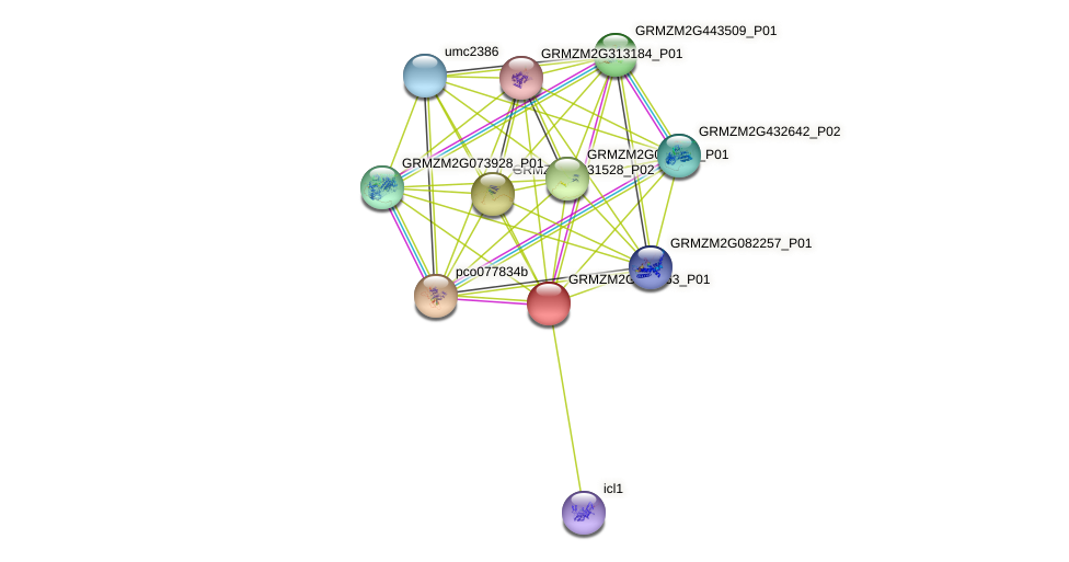GRMZM2G010363_P01 protein (Zea mays) - STRING interaction network