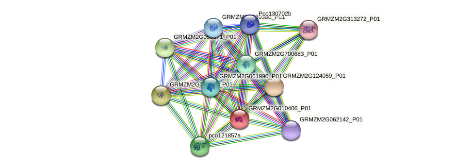 GRMZM2G010406_P01 protein (Zea mays) - STRING interaction network