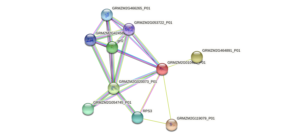 GRMZM2G010488_P01 protein (Zea mays) - STRING interaction network