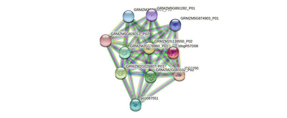 tdsgR57D08 protein (Zea mays) - STRING interaction network
