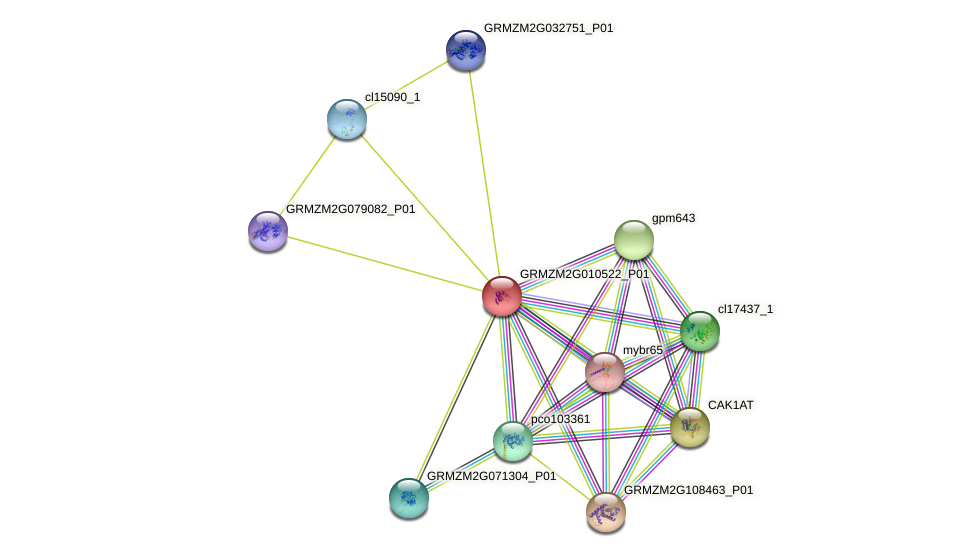 GRMZM2G010522_P01 protein (Zea mays) - STRING interaction network