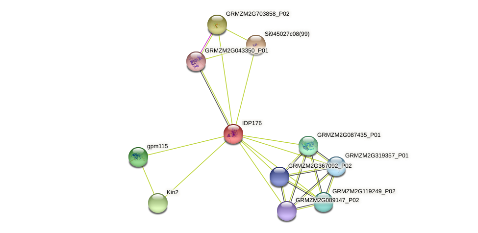 Zm.39291 protein (Zea mays) - STRING interaction network