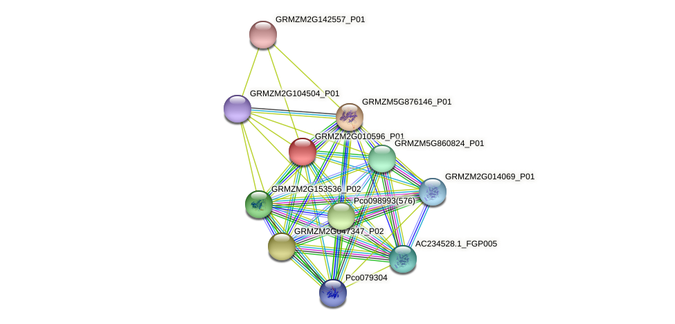 Zm.16490 protein (Zea mays) - STRING interaction network