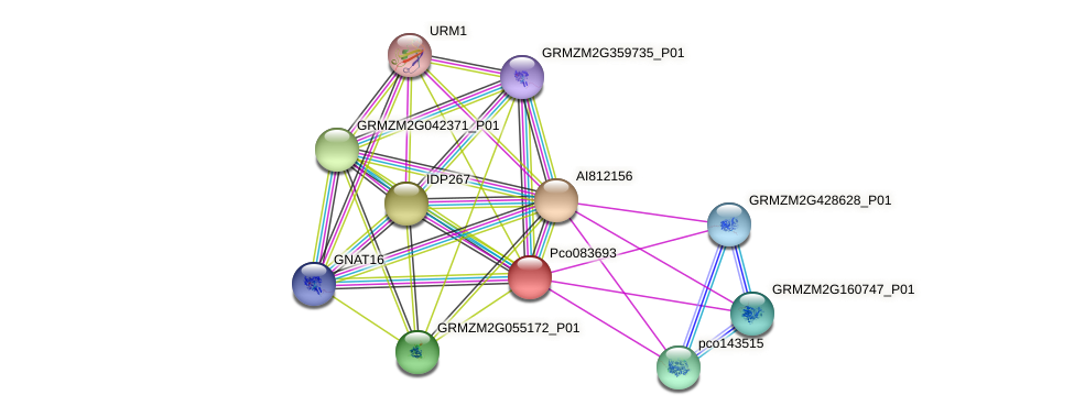 Zm.10814 protein (Zea mays) - STRING interaction network