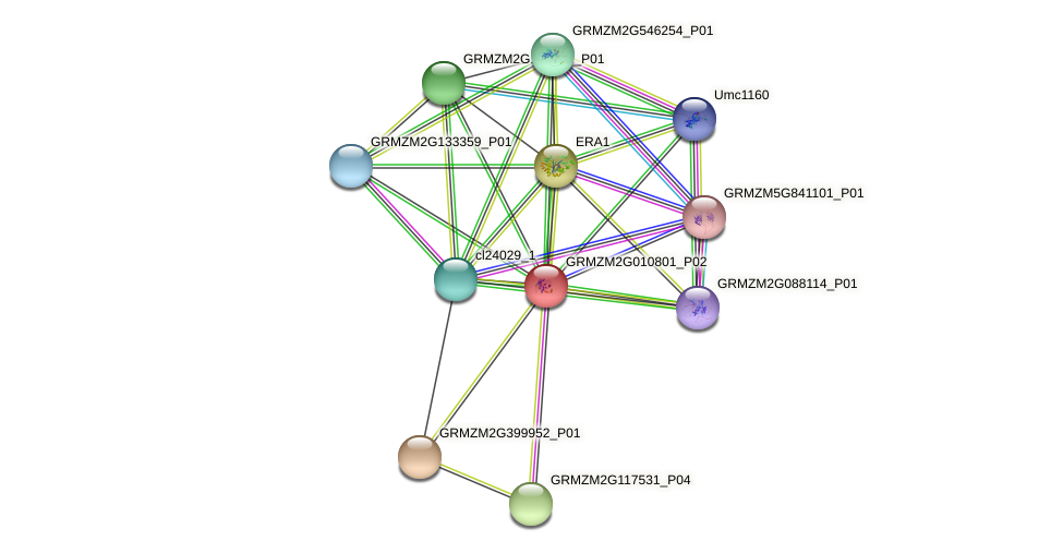 GRMZM2G010801_P02 protein (Zea mays) - STRING interaction network