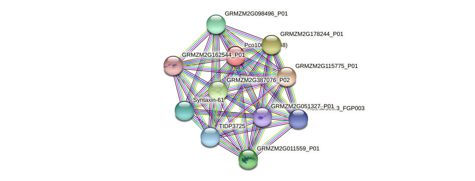 GRMZM2G010836_P02 protein (Zea mays) - STRING interaction network
