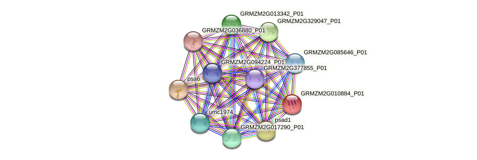 GRMZM2G010884_P01 protein (Zea mays) - STRING interaction network