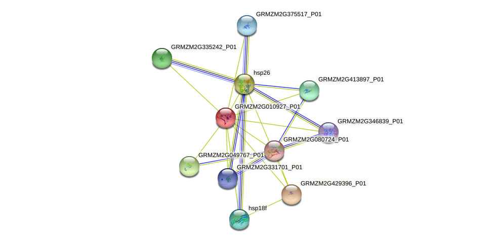 GRMZM2G010927_P01 protein (Zea mays) - STRING interaction network