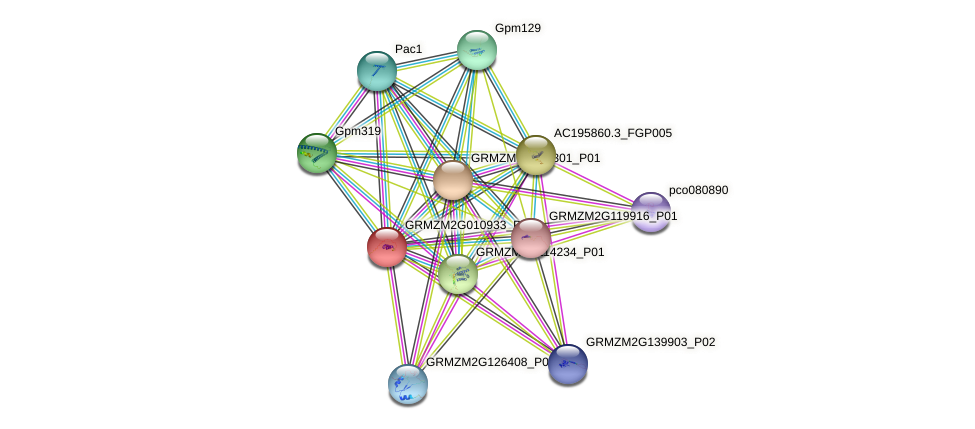 GRMZM2G010933_P01 protein (Zea mays) - STRING interaction network