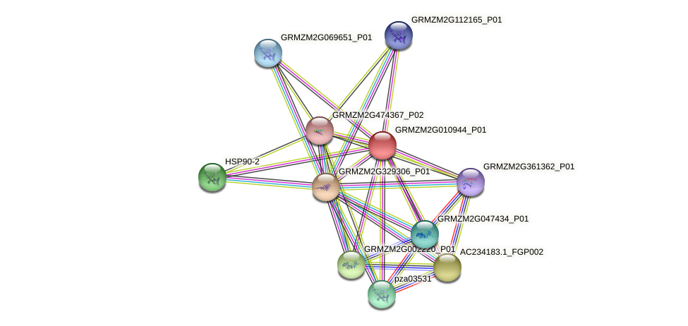 GRMZM2G010944_P01 protein (Zea mays) - STRING interaction network