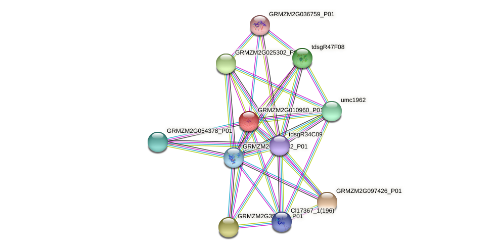 Zm.31053 protein (Zea mays) - STRING interaction network